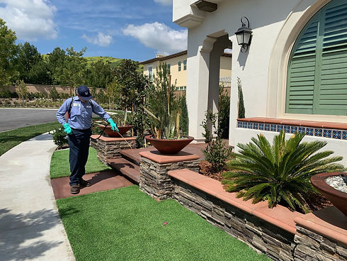 pest-control-service-technician-applying-eco-friendly-products-for-ant-infestation