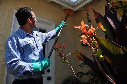 pet-safe-pest-control-technician-servicing-a-home-for-spider-webs