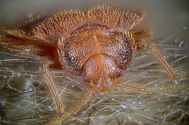 bed bugs orange county.jpg