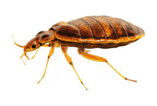 bed bug exterminator orange county ca.jp
