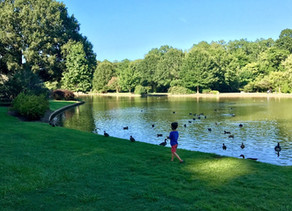 Best Tourist Attractions in Charlotte, North Carolina