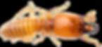 termite exterminator irvine ca.png