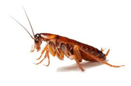 cockroach exterminator irvine ca.jpg