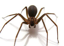 spider-extermination.png
