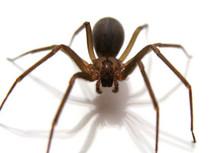 spider exterminator.jpg