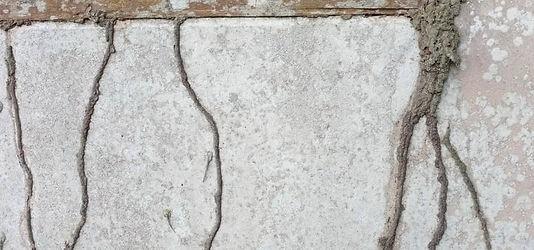 termite-mud-tubes.jpg