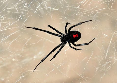 spider pest control.JPG
