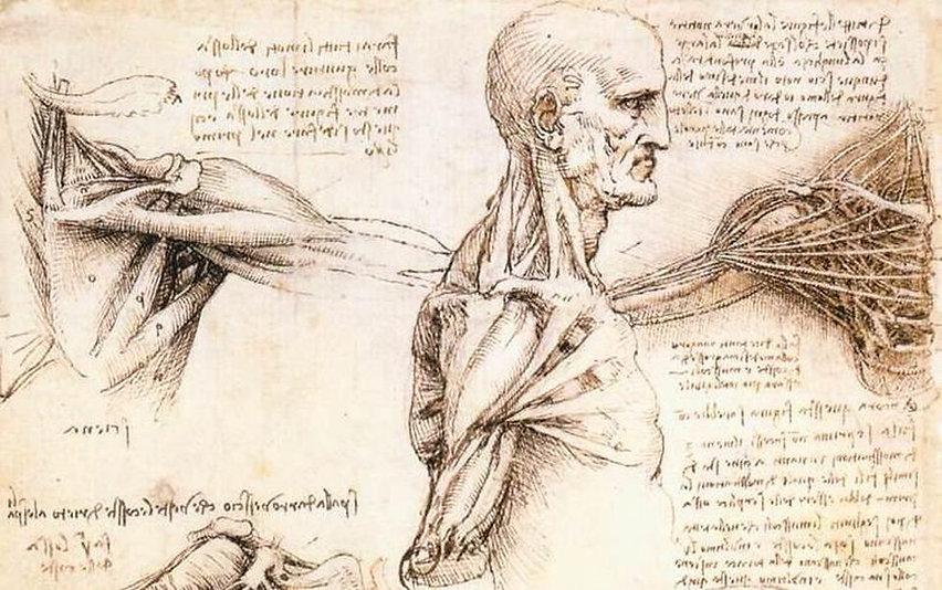 https___blogs-images.forbes.com_evaamsen_files_2019_05_Leonardo_da_Vinci_-_Anatomical_stud