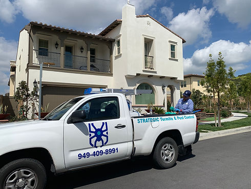strategic-termite-and-pest-control-technician-servicing-a-customer-for-ant-and-spider-infestations