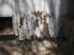 termite control orange county.jpg