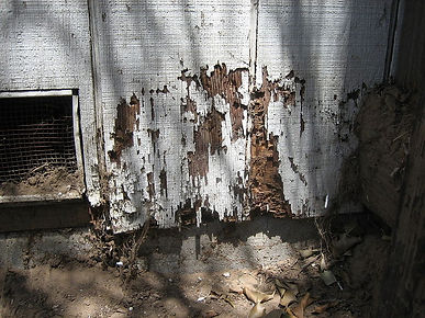 example-of-structural-damage-from-termites