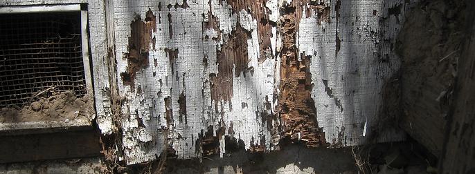 common-termite-damage-areas