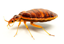 bed bug exterminator orange county.jpg