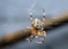 spider exterminator irvine california.jp