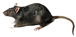 rodent exterminator orange county.png