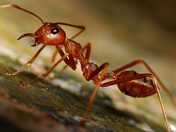 picture-of-ant.jpg