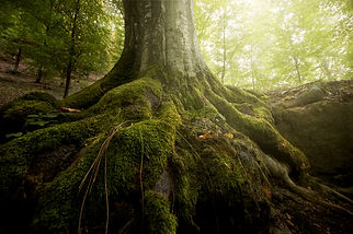 tree root stock.jpg