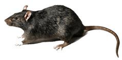 rodent exterminator orange county.jpg