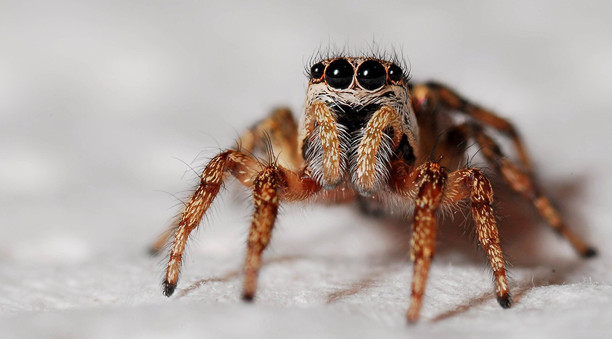 spider exterminator orange county.jpg