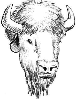 BuffaloHead (2).jpg