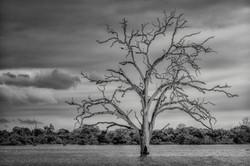 Flickr - The Tree