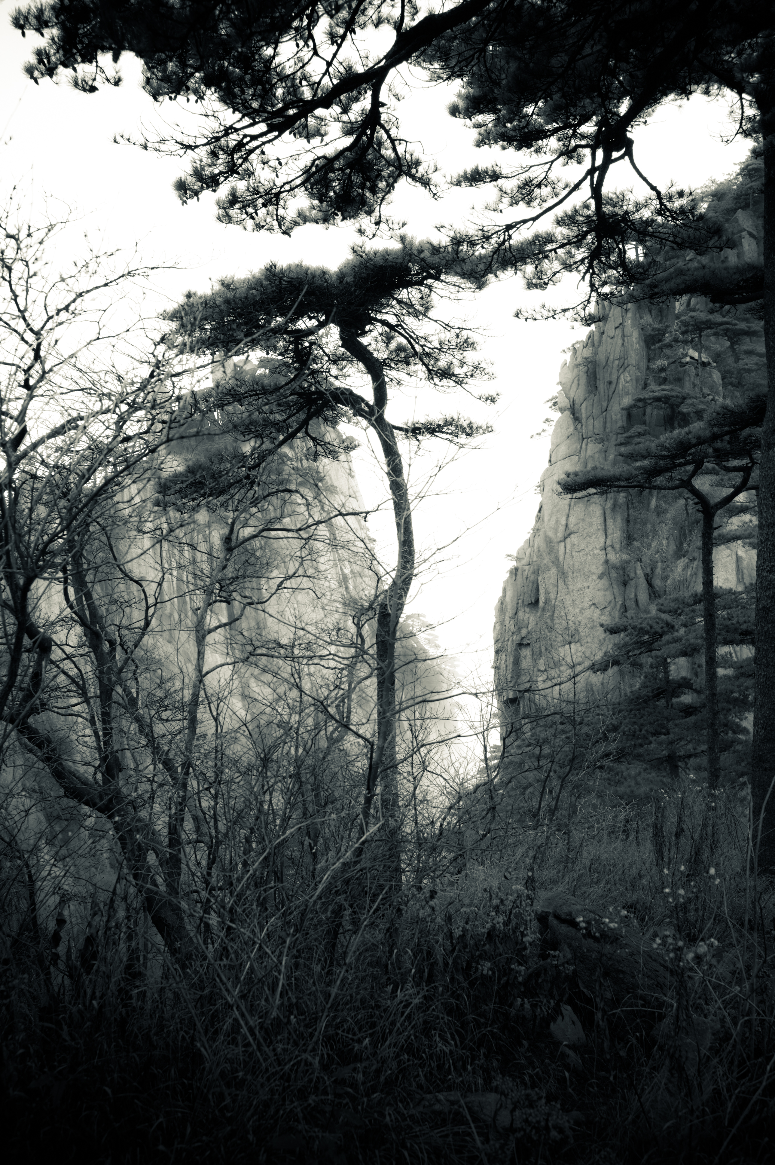 Flickr - Pine Trees (18) - Huangshan, China