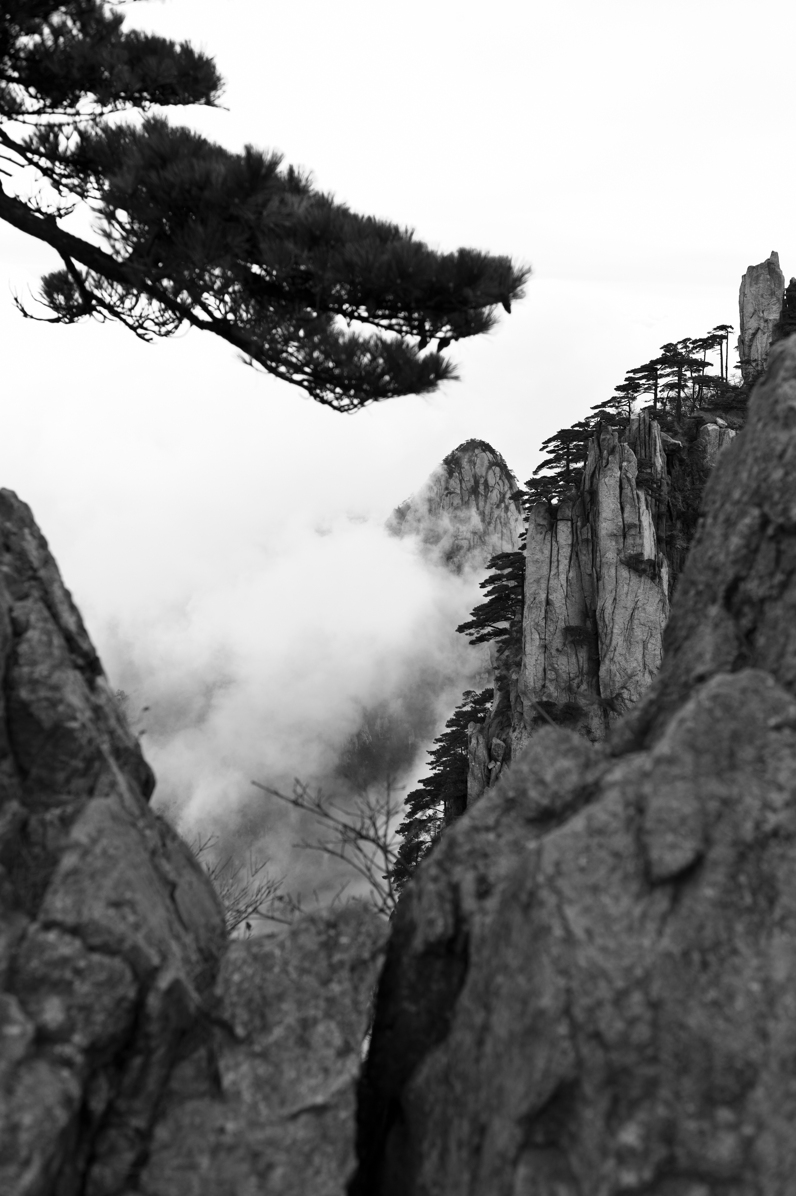 Flickr - Pine Trees (16) - Huangshan, China