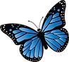 Butterfly.transparent.png