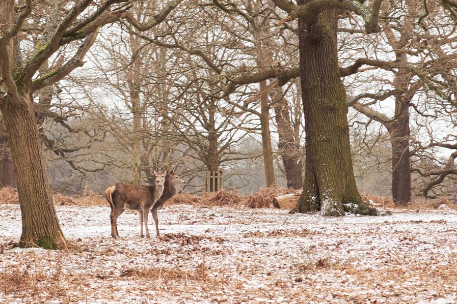 Sanity, Sara Lacuesta photography, documentary photography, London based photographer, fotografia documental  42.jpg