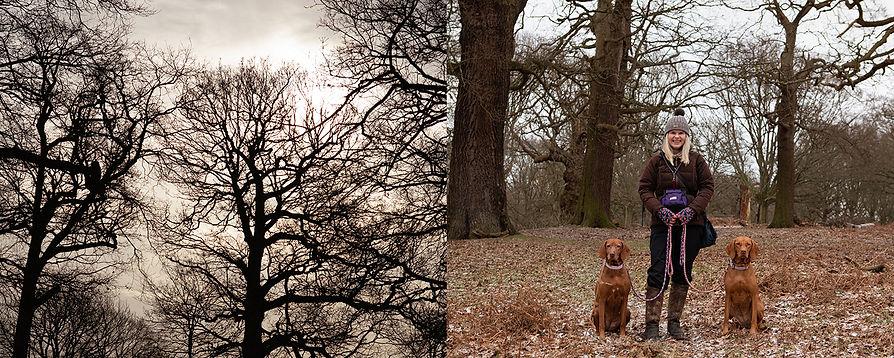 sanity Richmond Park ©Sara lacuesta photography.jpg