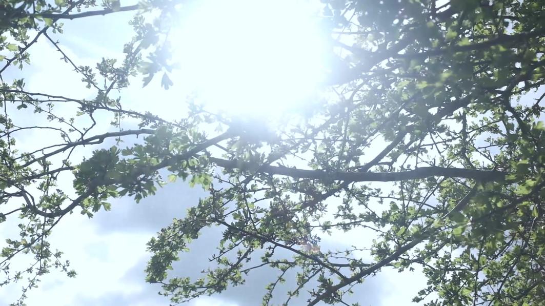 video web sun.mp4
