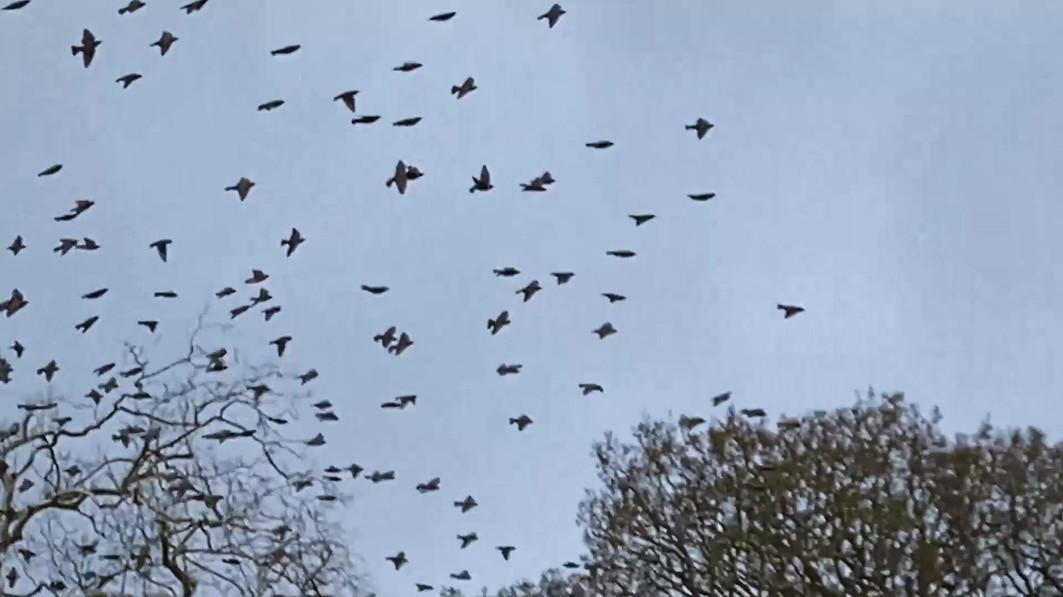 video web birds.mp4