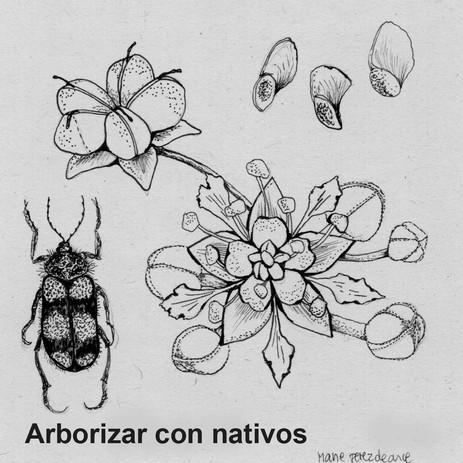 Arborizar con nativos
