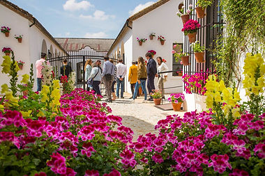 alvear winery andalucia spain.jpg