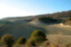 ribera del duero winery spain wine.jpg