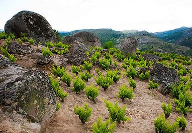 comando g winery vinos de madrid.jpg
