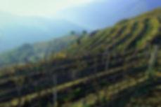 el bierzo bodegas gancedo wine spain.jpg