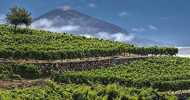 bodegas vinatigo tenerife spanish wine.j