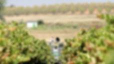 condado de huelva Photo by Huelva Inform