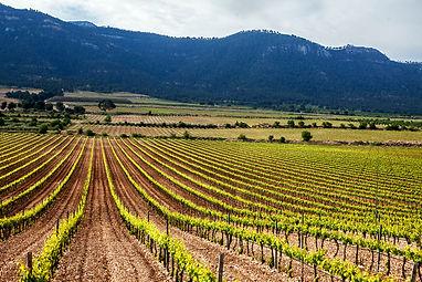 yecla denominacion de origen wine spain.