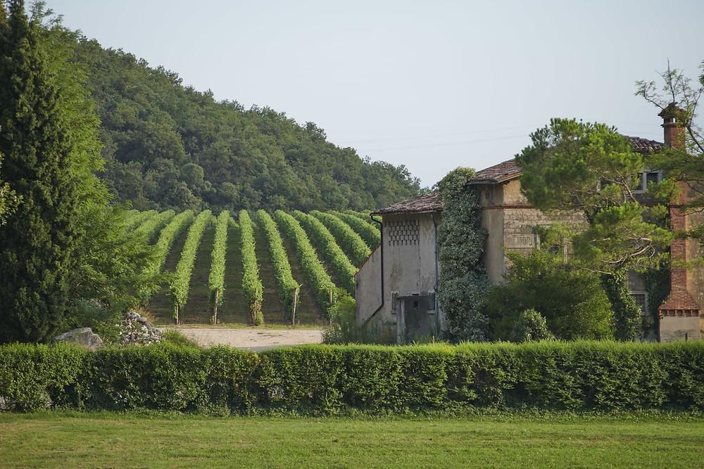 Cantine Delibori, near Verona