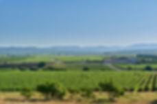 el terrerazo valencia wine spain.jpg