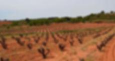 utiel requena wine spain.jpg