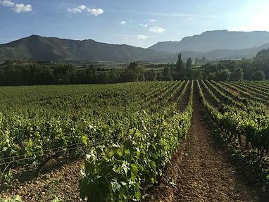 rueda winery spain wine.jpg