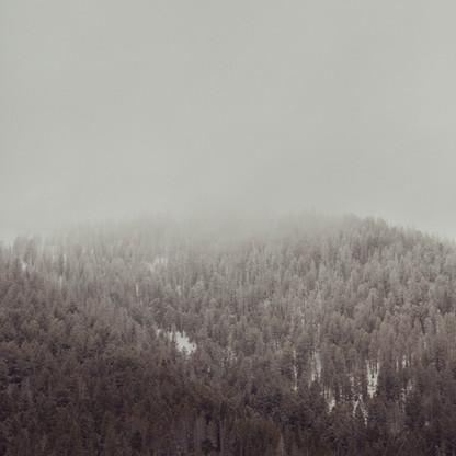 Snowy_threes.jpg