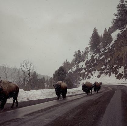 buffalo_edited.jpg
