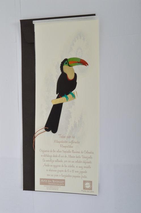 Tucán pico iris