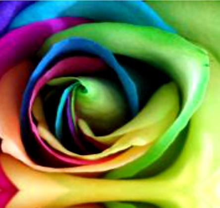Rosa (extracto)