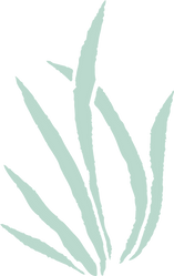 Plante 2 couleur - herbe - Kupoï