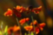 flower nature photography photographer Stroud